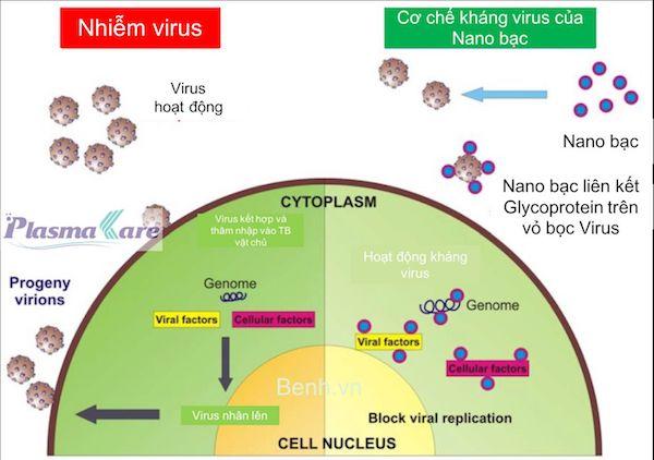 Co-che-khang-virus-cua-nuoc-suc-mieng-nano-bac