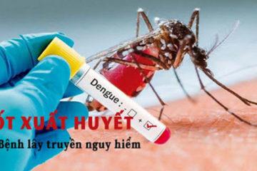 Tìm hiểu bệnh sốt xuất huyết có nguy hiểm không?