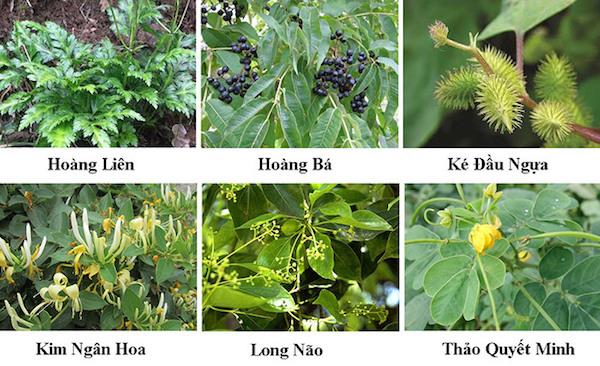 review-ve-nhung-cong-dung-cua-kem-boi-da-thuan-moc-4